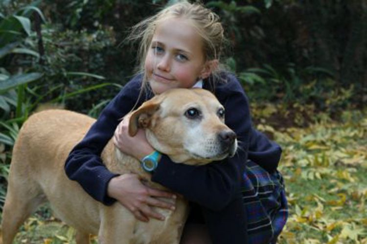 human helps diabetic dogs